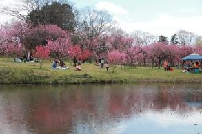 Koga Park 3
