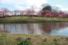 Koga Park 2
