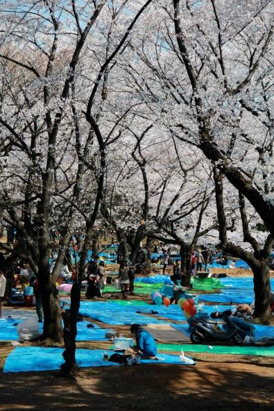 A sea of tarps
