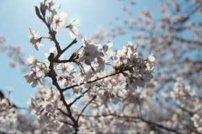 Blossoms 3