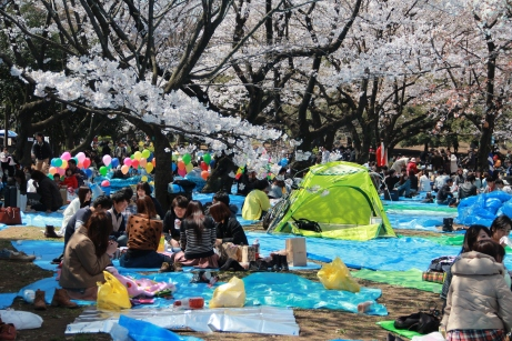 Other Hanami Goers