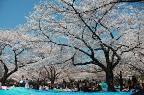 Yoyogi Trees