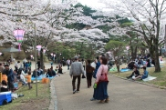 More of Utsunomiya