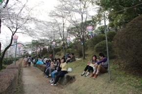 Lounging Under the Sakura