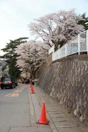 Urban Sakura
