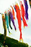 More vibrant fish