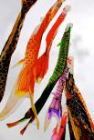 Vibrant Fish