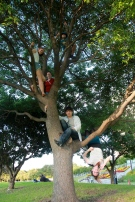 Up in the Tree