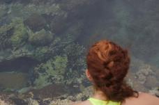 Gazing into the Herring Pools