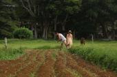 Farming Thornleigh