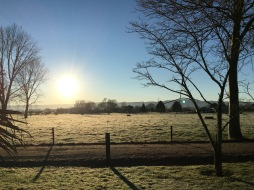 Morning frost in Matamata